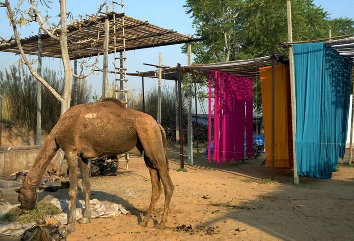 Camel, fabrics on racks, Sanganer, 2005.