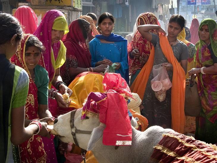 Pilgrims with a sacred cow, Pushkar, 2005.